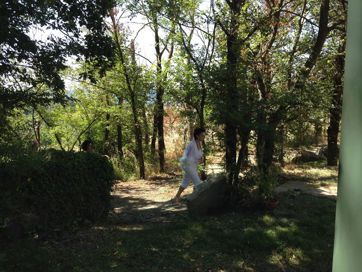 Foto Cammino nel bosco